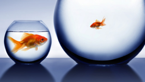 fishbowl1